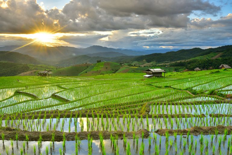 770 Sensationell Nord Rice terrance In green season Chiangmai shutterstock 721586797